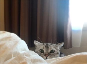 【今日のにゃんこ】じーーーーっ! こっそり見つめるアランくん