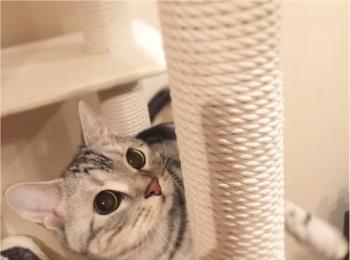 【今日のにゃんこ】もう寝る時間? 遊び足りないアランくん