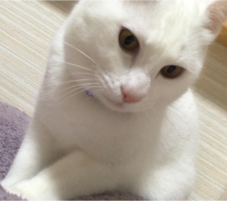 ♡2月22日は猫の日♡_7