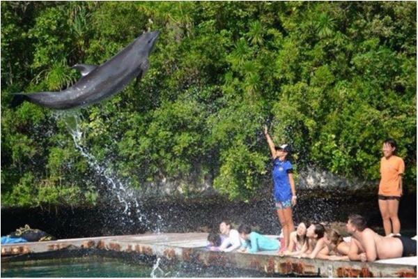 【travel】パラオでイルカに乗ろう~死ぬまでにやりたいことの1つ~_5