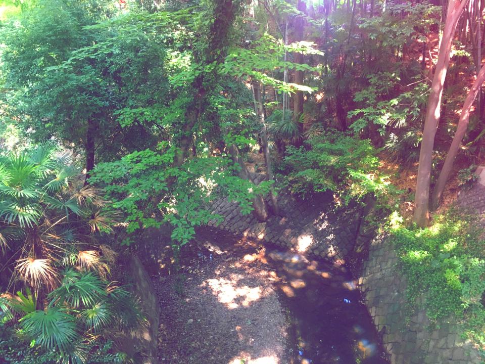 【癒しスポット】東京のオアシス。仕事に疲れたときは森林浴でリフレッシュ!_5