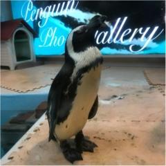 【結婚祝いにぴったり♡】池袋にある『ペンギンのいるBAR』で結婚した友達のお祝いをしました˚✧