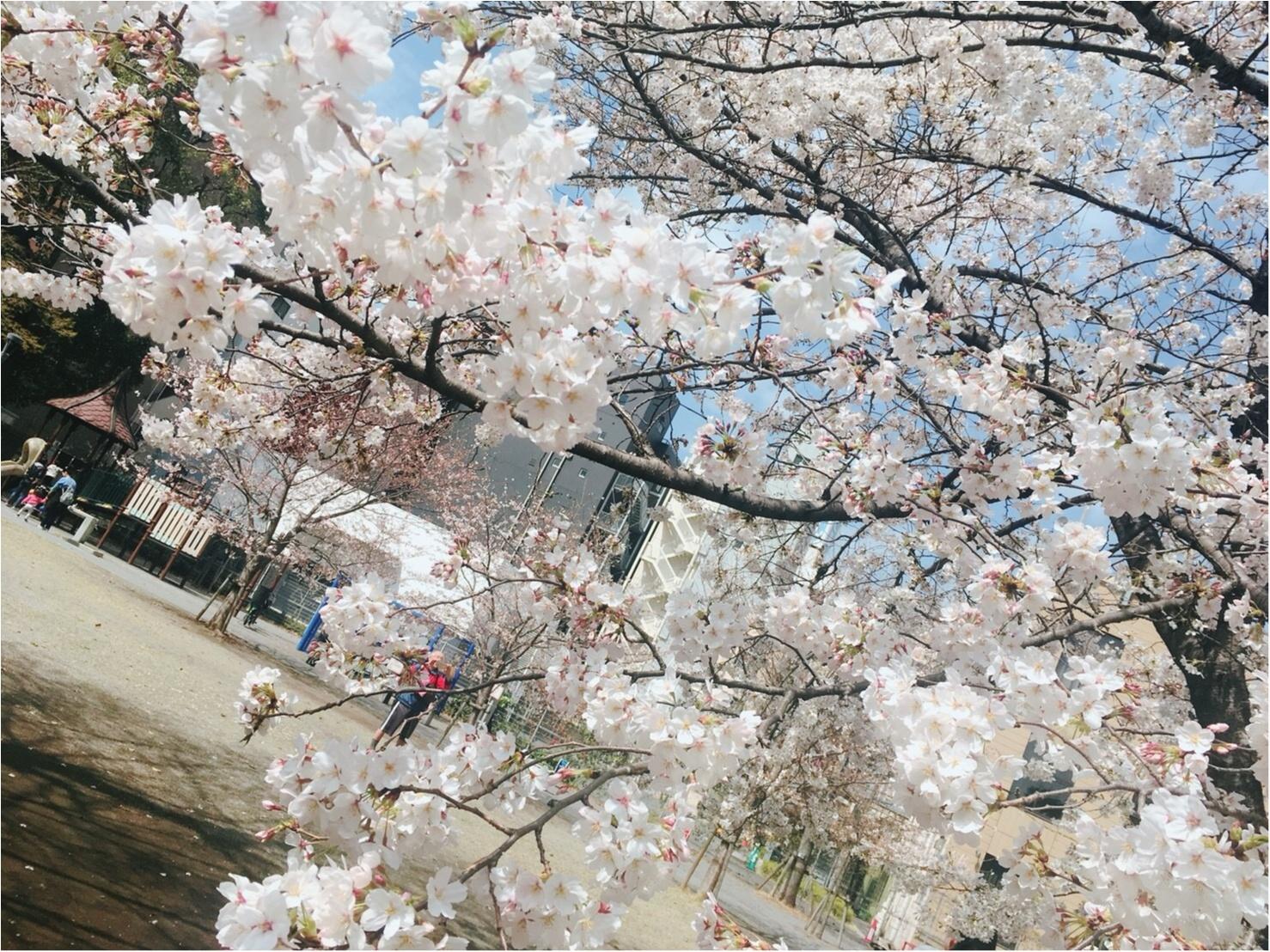 【お花見速報】東京は今週が見頃!?な桜事情_3