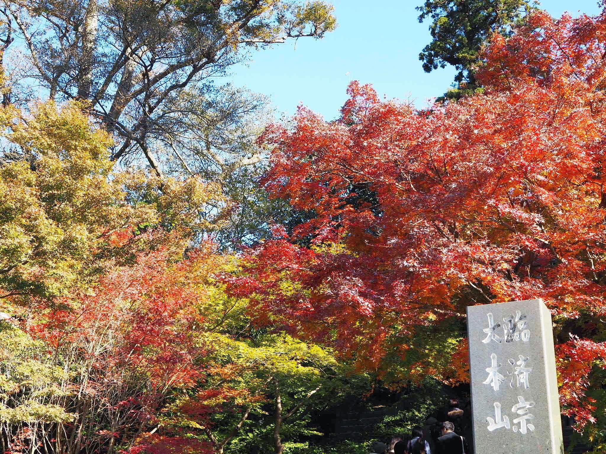 【#秋の鎌倉さんぽ】古民家でいただく絶品ビーフシチューと北鎌倉の紅葉♡_8