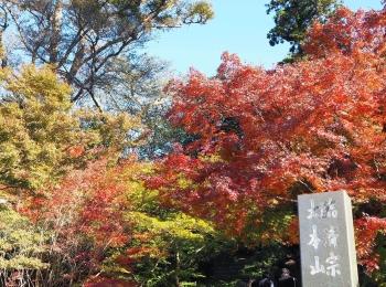 【#秋の鎌倉さんぽ】古民家でいただく絶品ビーフシチューと北鎌倉の紅葉♡