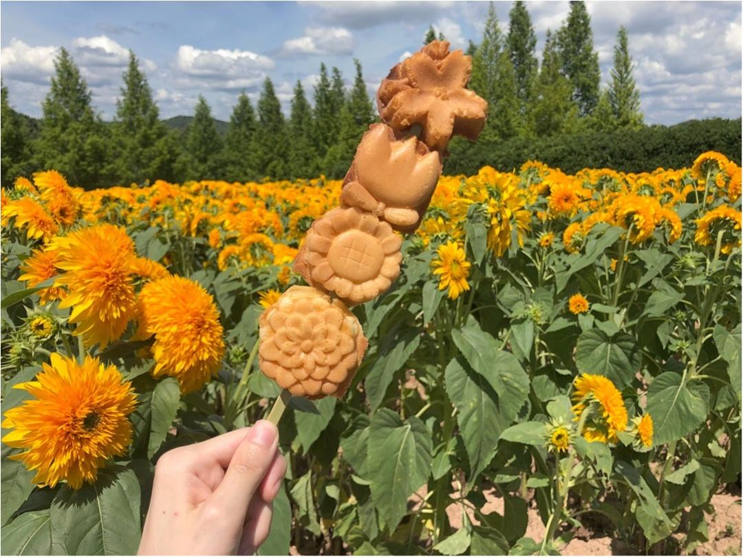 美しい夏の絶景♡ 100万本のひまわりが一面に広がる『ひまわり畑』が見たい♡♡_4