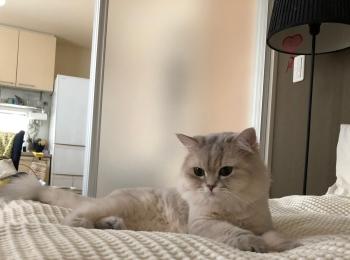 【今日のにゃんこ】ベッドの上、物思いにふけるココンちゃん