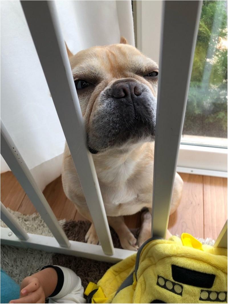 【今日のわんこ】「わたしもそっちに行きたいワン」と柵の間に挟まるまつこ♡_1