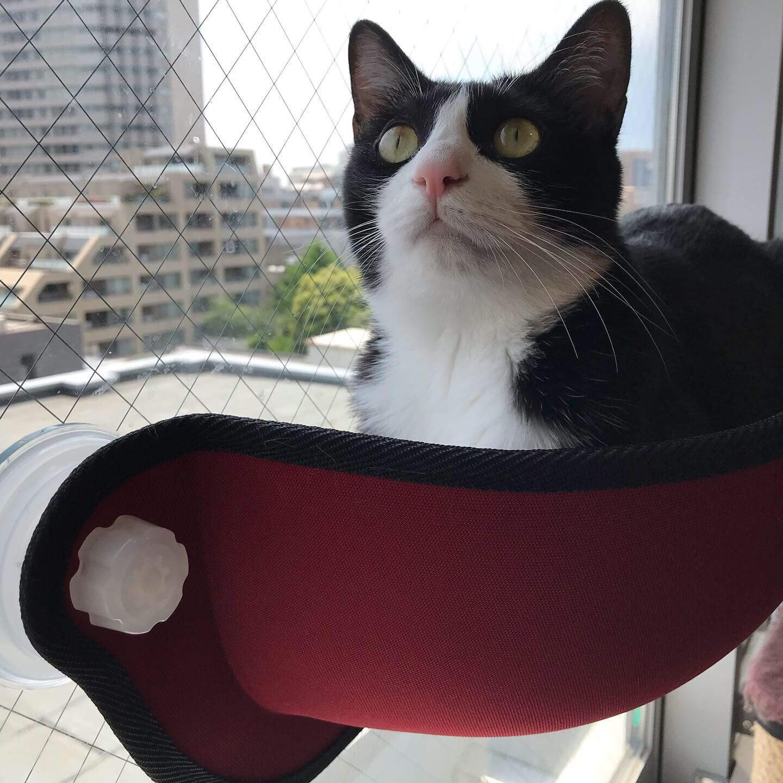 【今日のにゃんこ】真っ赤な窓ベッドでくつろぐルウくん★_1