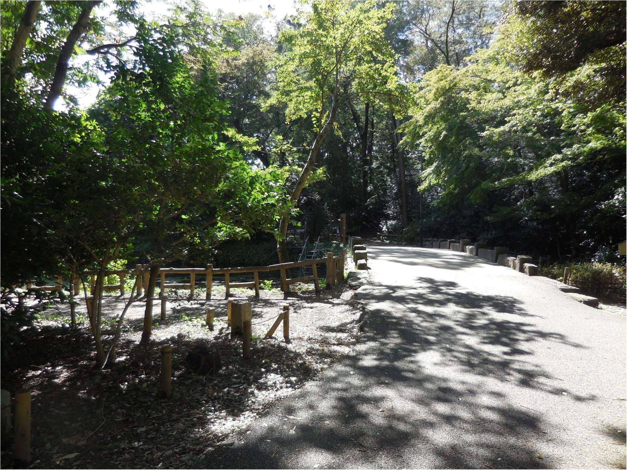 【吉祥寺井の頭公園】ひさしぶりに歩いてきました_1