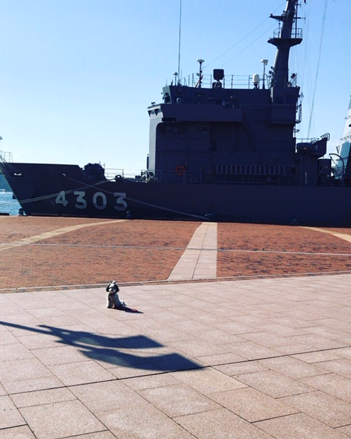 【今日のわんこ】でっかい船と一緒に写る太郎くん_1