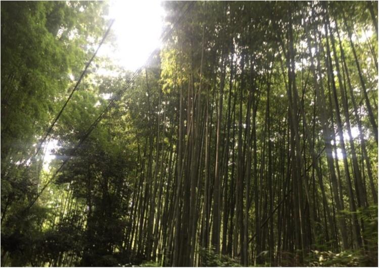 【京都】可愛い絵馬に願いを込めて♡パワースポット野宮神社へ!_3