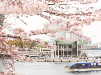 約600本の桜のトンネルをくぐりながら船上お花見♡ みなとみらい「大岡川桜クルーズ」が素敵すぎる!【#桜 2019 13】