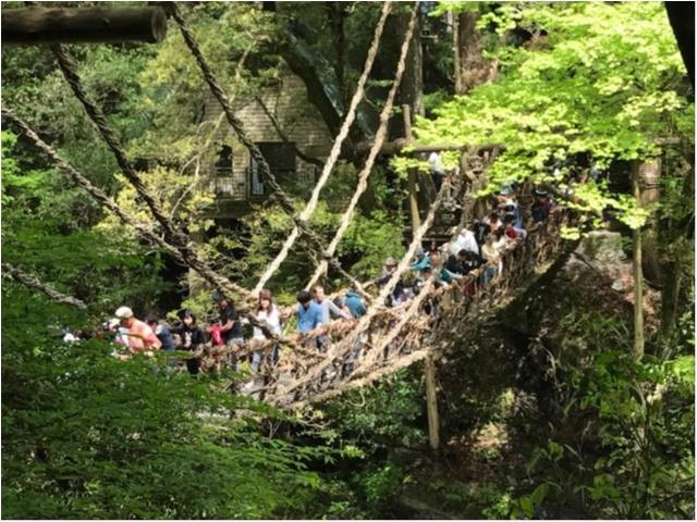 【一度は行きたい日本の絶景】徳島・祖谷のかずら橋_3