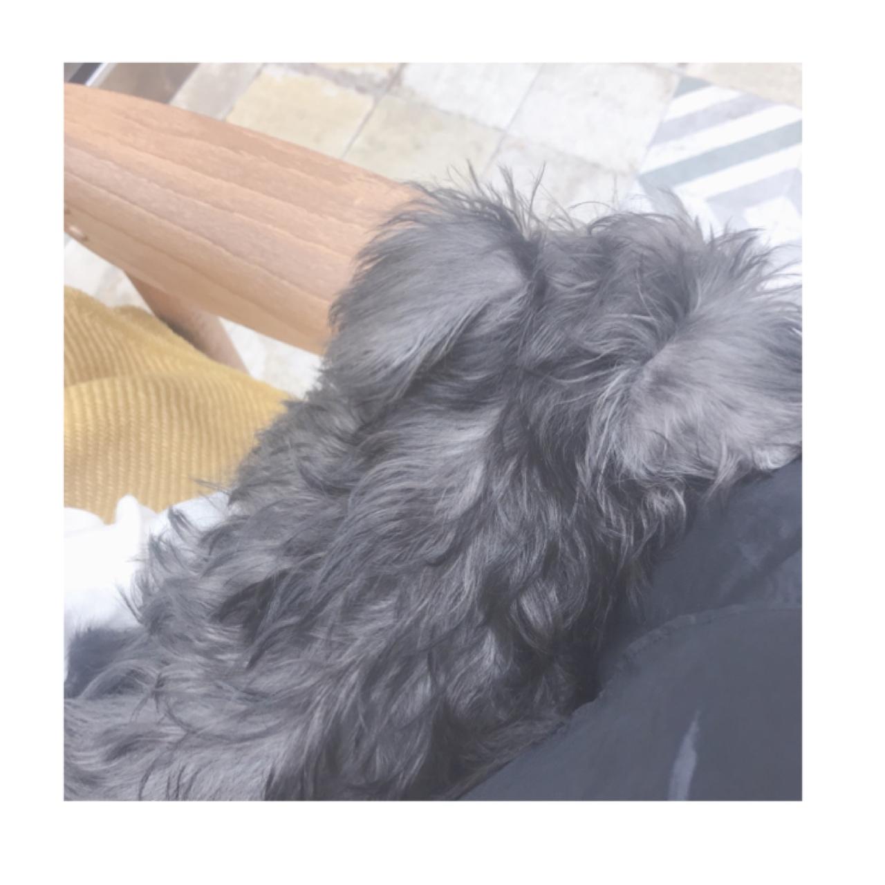【犬のいる美容院】Gigi代々木店に行ってきた_2