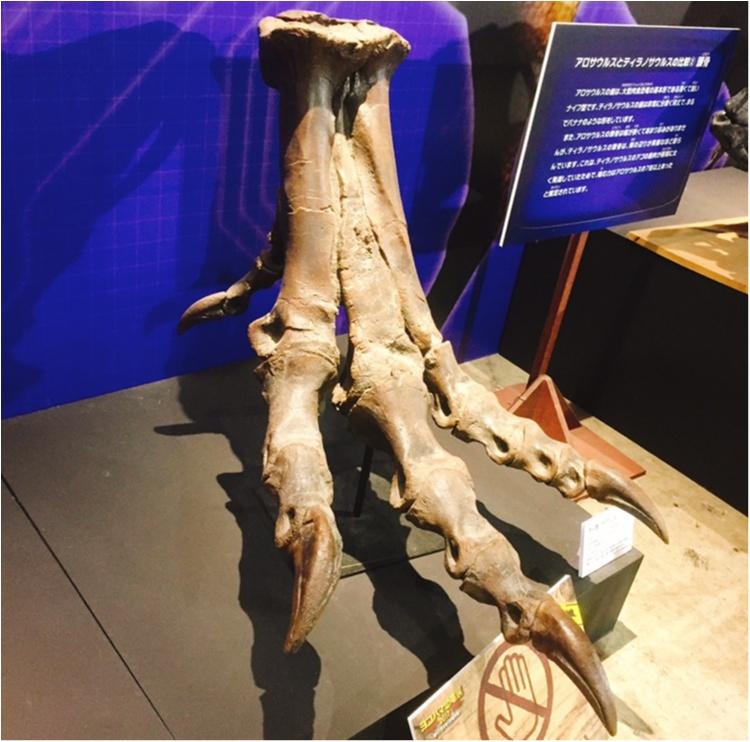 【9/3まで】大人も子供も楽しめる!!大迫力《横浜恐竜展2017》で動く恐竜の森を体験♪_5
