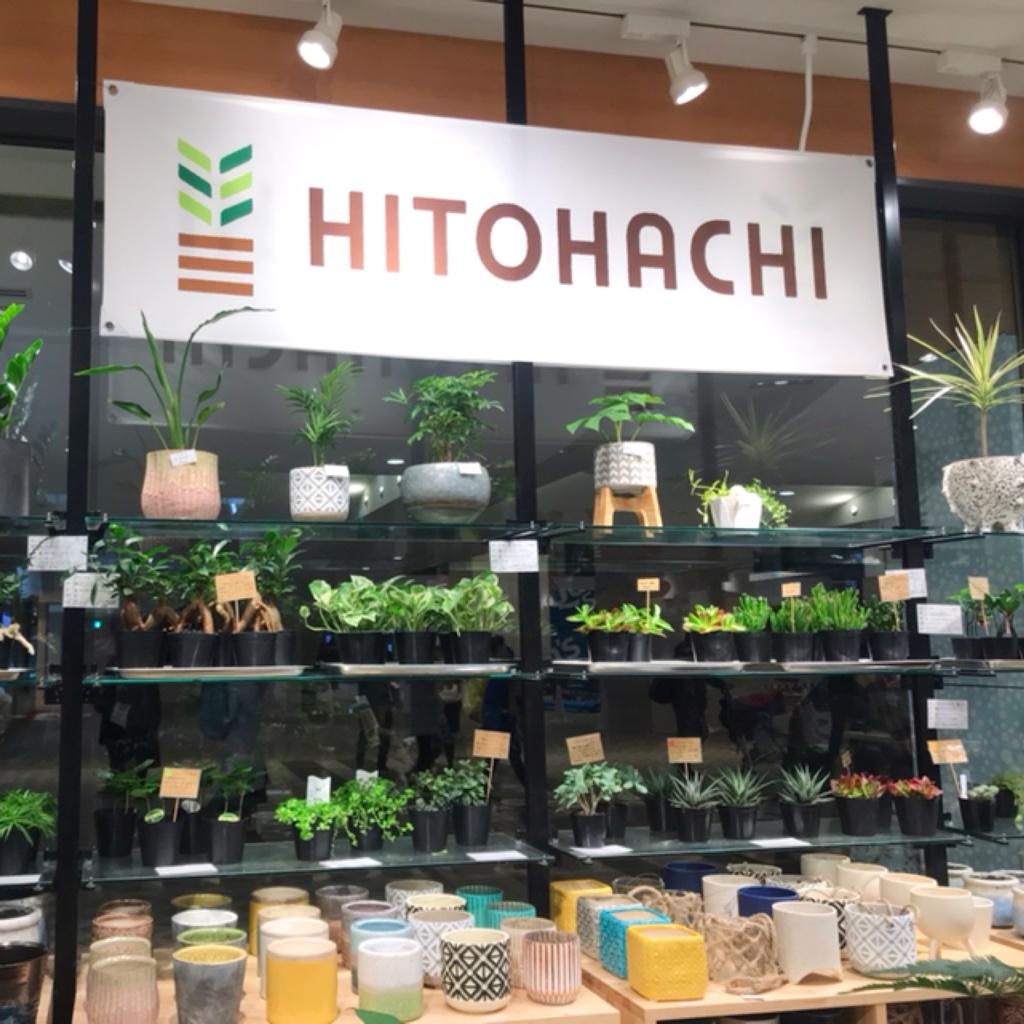 HITOHACHI みなとみらい 横浜 観葉植物