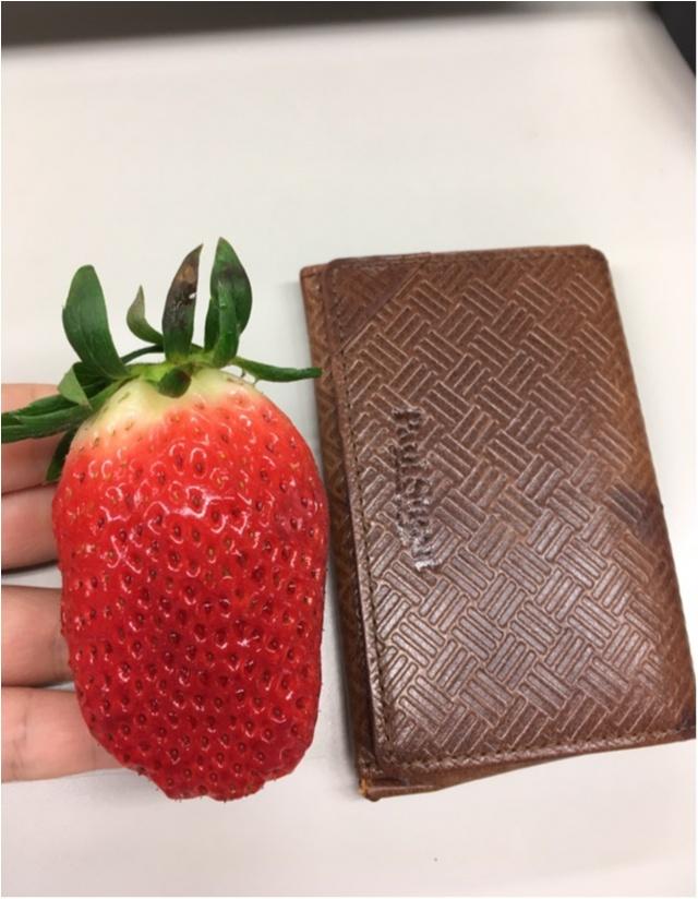 好きなイチゴの品種を発見!!めちゃめちゃおおぶり章姫サマ。_2