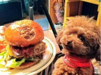 【今日のわんこ】テテちゃんと、おいしそうなハンバーガー