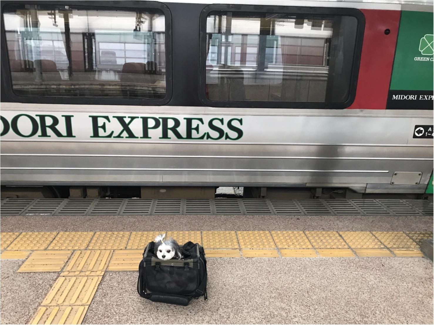 【今日のわんこ】さあお出かけだ♪ 太郎くん、電車に乗るの巻_1