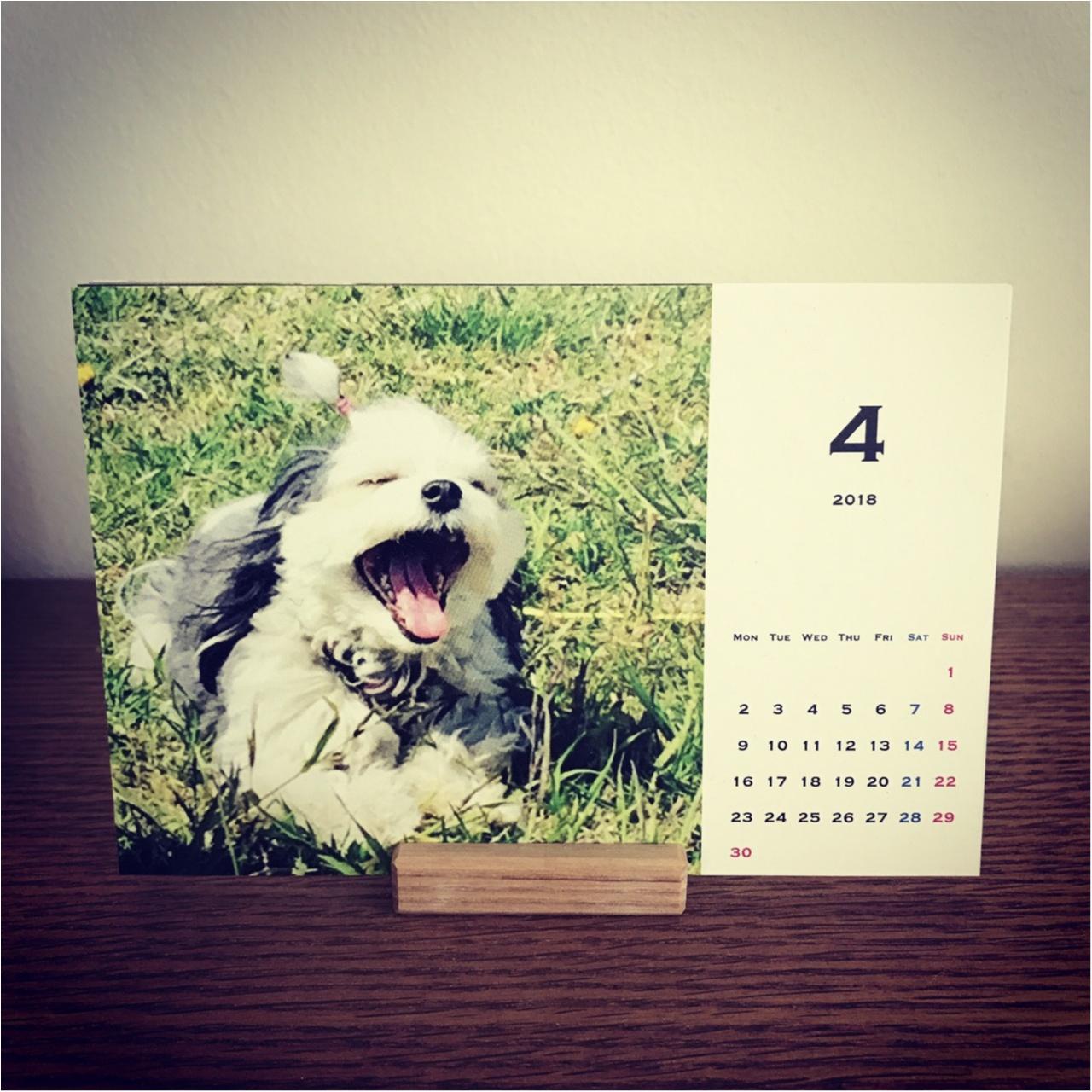 【今日のわんこ】作っちゃいました♪ 太郎くん、カレンダーになる!_1