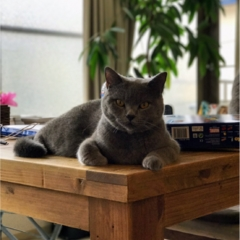 【今日のにゃんこ】いれば安心!? お部屋の守り猫ムクくん