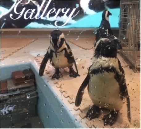 【結婚祝いにぴったり♡】池袋にある『ペンギンのいるBAR』で結婚した友達のお祝いをしました˚✧_2
