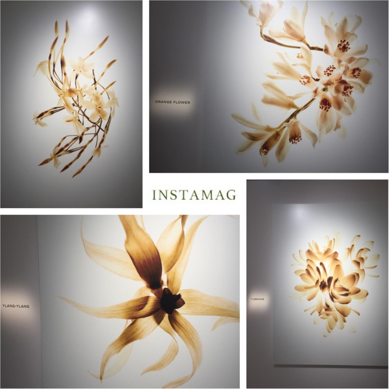 ♡シャネル新作フレグランスのイベントへ行ってきました!新作の香りの秘密は4種類の白い花なんです♡_2