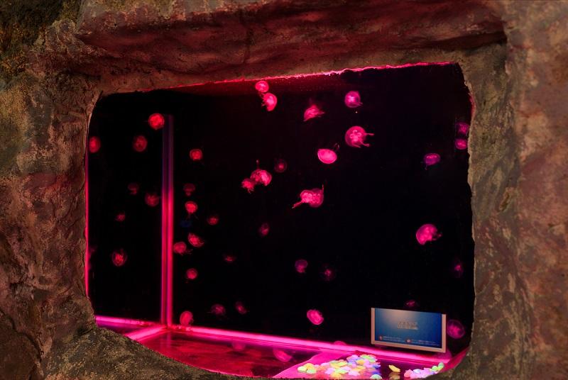 全身PINKなら入場料半額!! 温泉もスイーツも館内すべてピンク♡ 女子旅は『箱根小涌園ユネッサン』 記事Photo Gallery_1_6