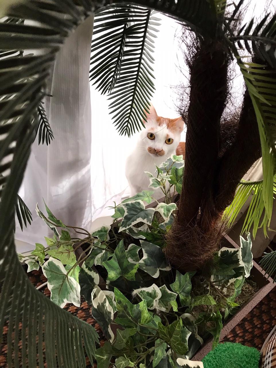 【今日のにゃんこ】植物に興味津々なルウくん☆_1