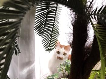 【今日のにゃんこ】植物に興味津々なルウくん☆