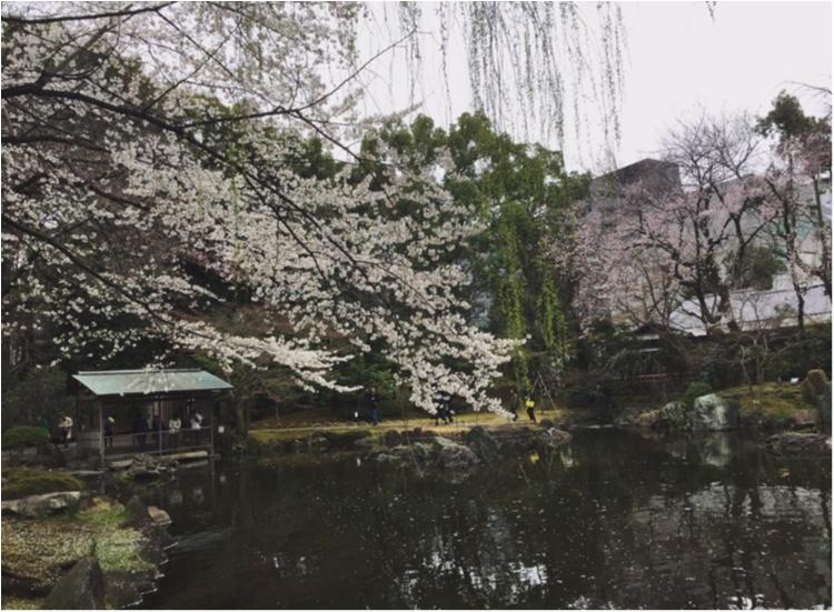 【4/6まで】都内でも七分咲き♪♪*千代田のさくらフェスティバル*に行ってきました✨✨_3