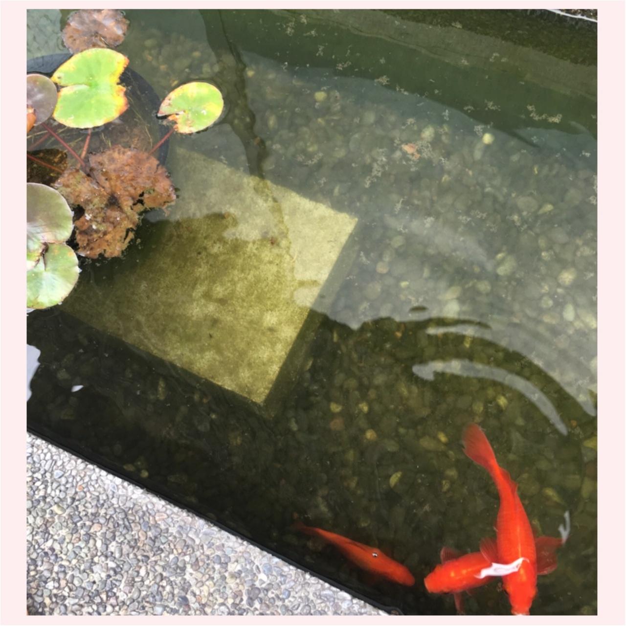 京都伏見 日本酒酒蔵めぐり _1