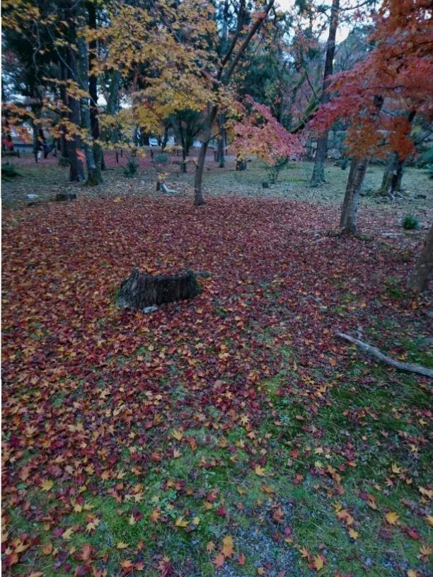 今が見ごろ!関西の紅葉スポット【京都】秋を感じてきました。_3