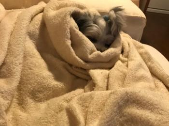 【今日のわんこ】あまりの寒さに布団から出られない太郎くん。