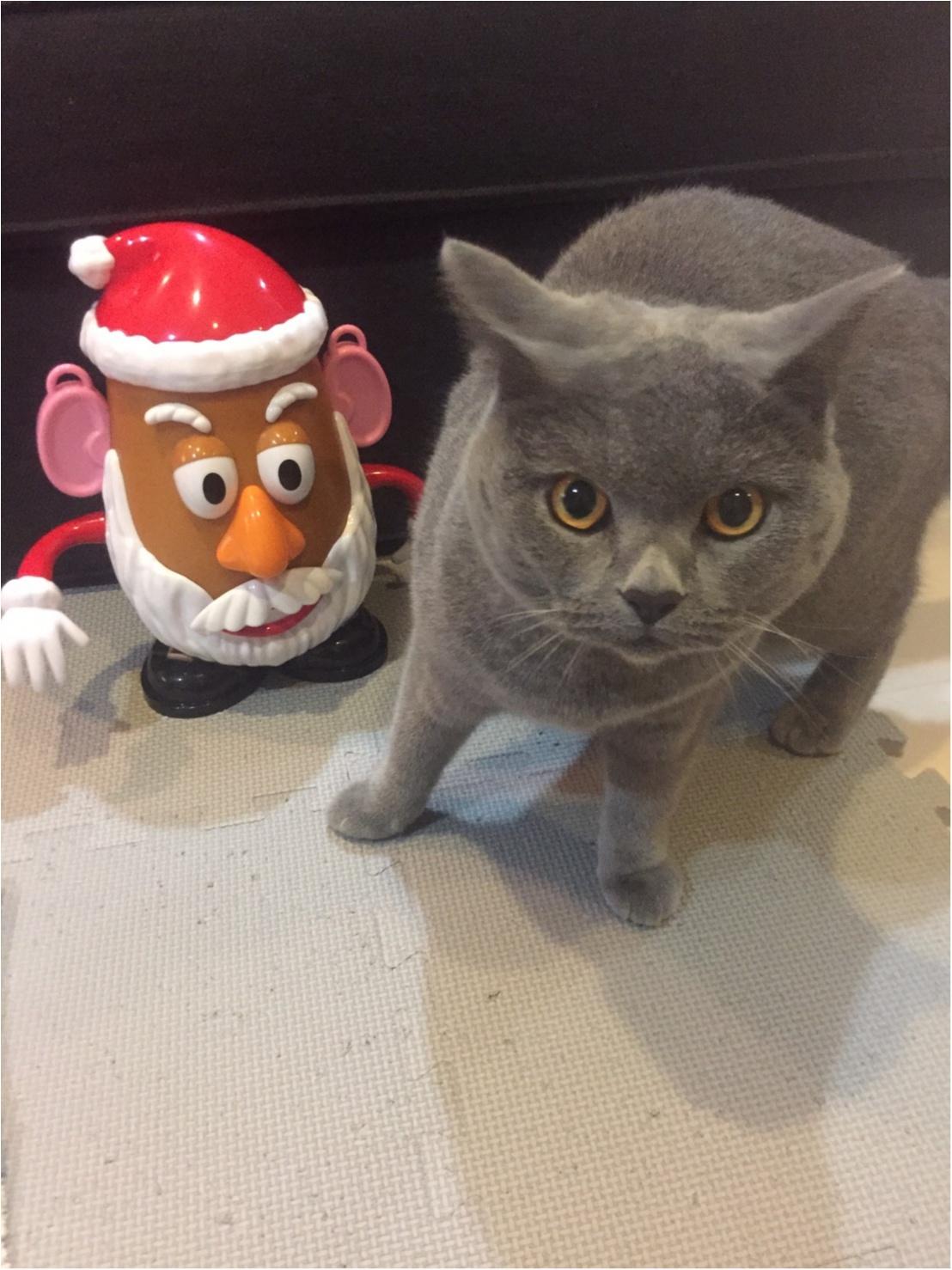 【今日のにゃんこ】サンタはこわい!? 怯えるムクくんをスクープ_1