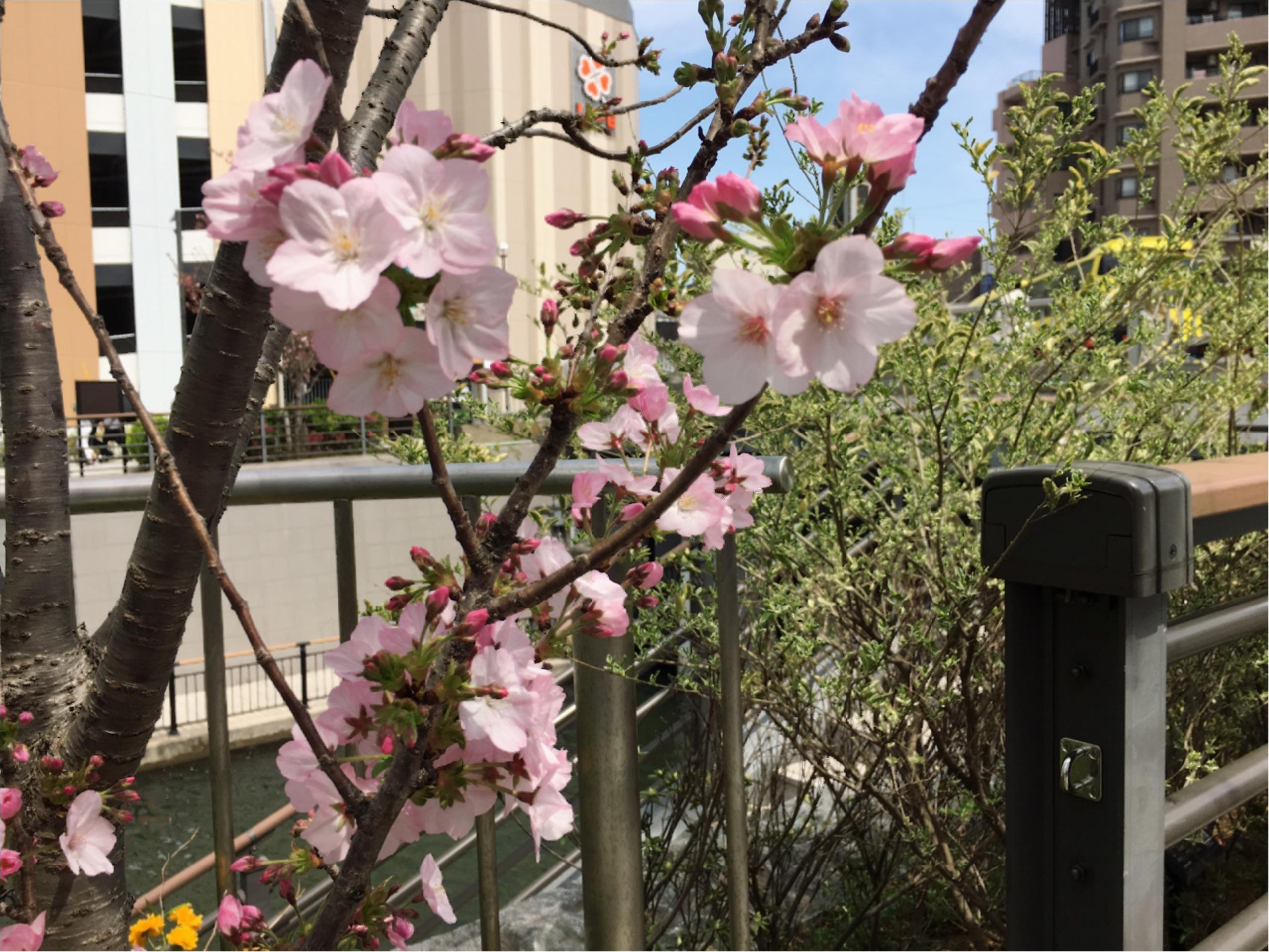 錦糸町〜スカイツリー★みそさんぽ-乗り遅れたお花見できちゃいました!_4