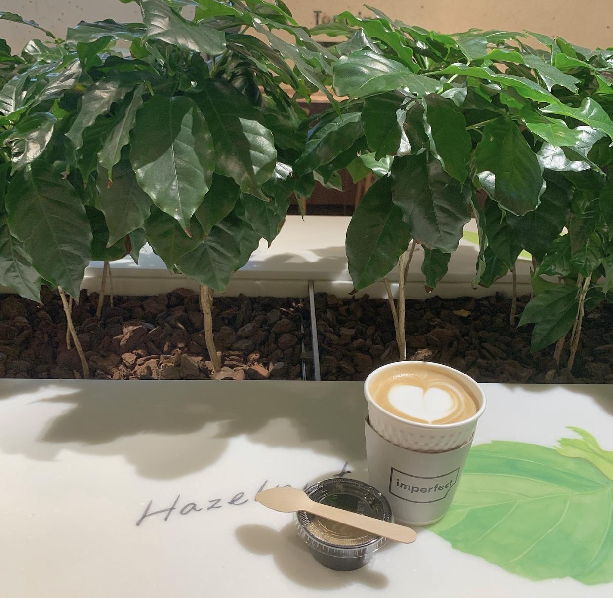 【表参道カフェ】ウェルフードマーケット&カフェに行ってきました✩*॰¨̮_4