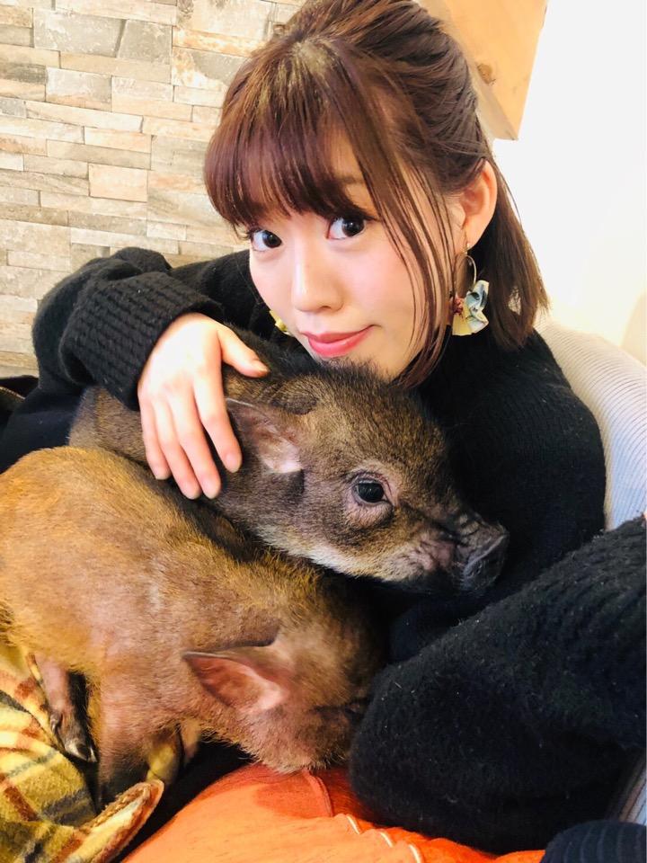 可愛すぎるマイクロブタちゃん♡動物カフェで1番のおすすめ!その魅力お伝えします☺︎!_5