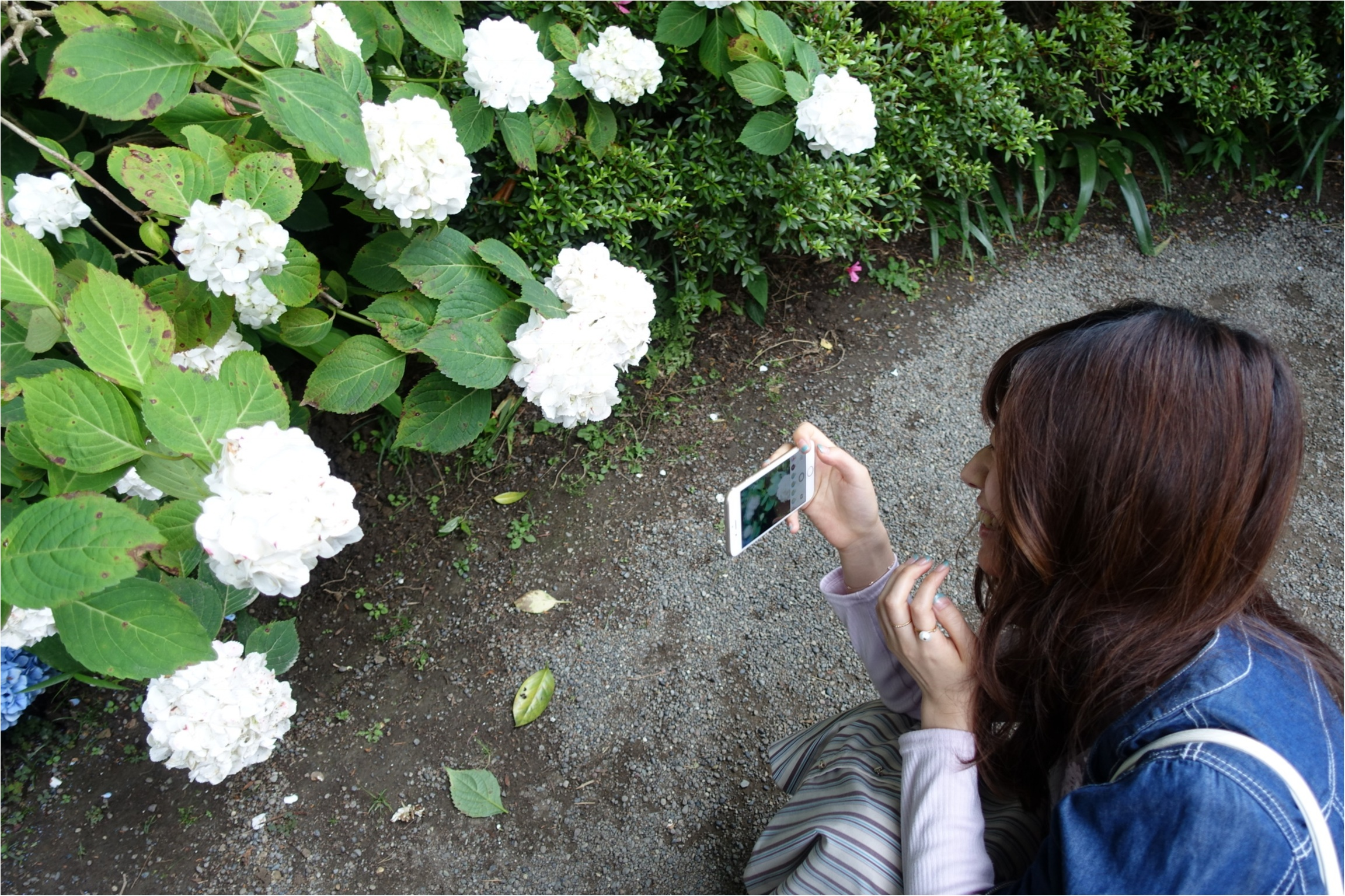 【鎌倉の紫陽花】並ばず気軽に見られる≪明月院≫の紫陽花が見頃✨北鎌倉駅から徒歩10分!_7