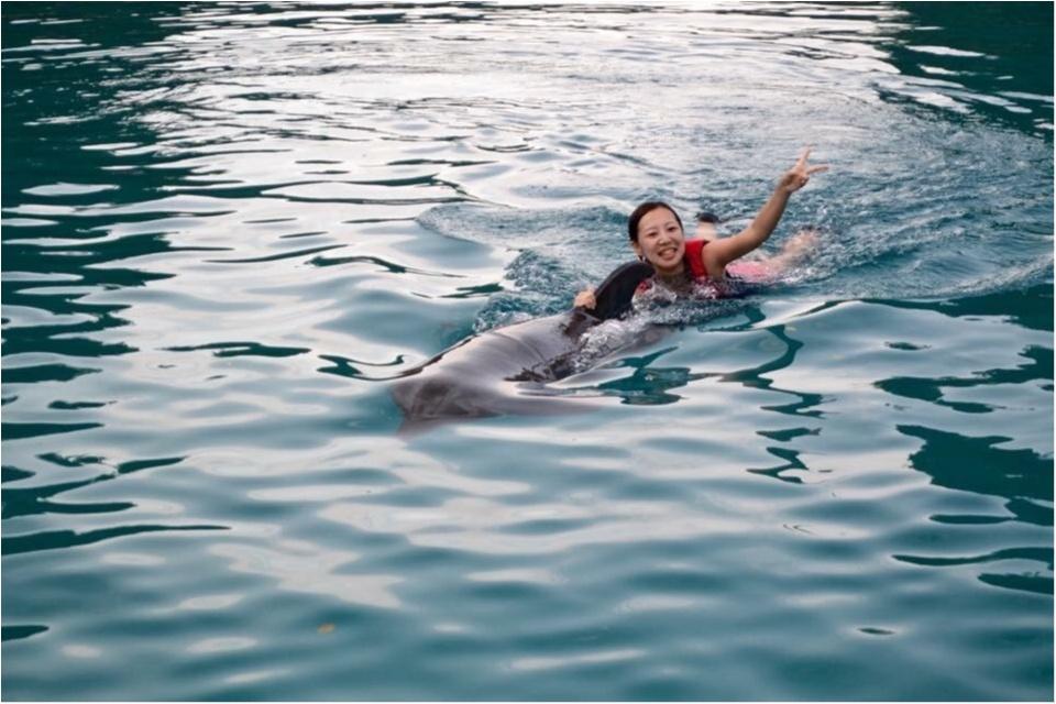 【travel】パラオでイルカに乗ろう~死ぬまでにやりたいことの1つ~_7