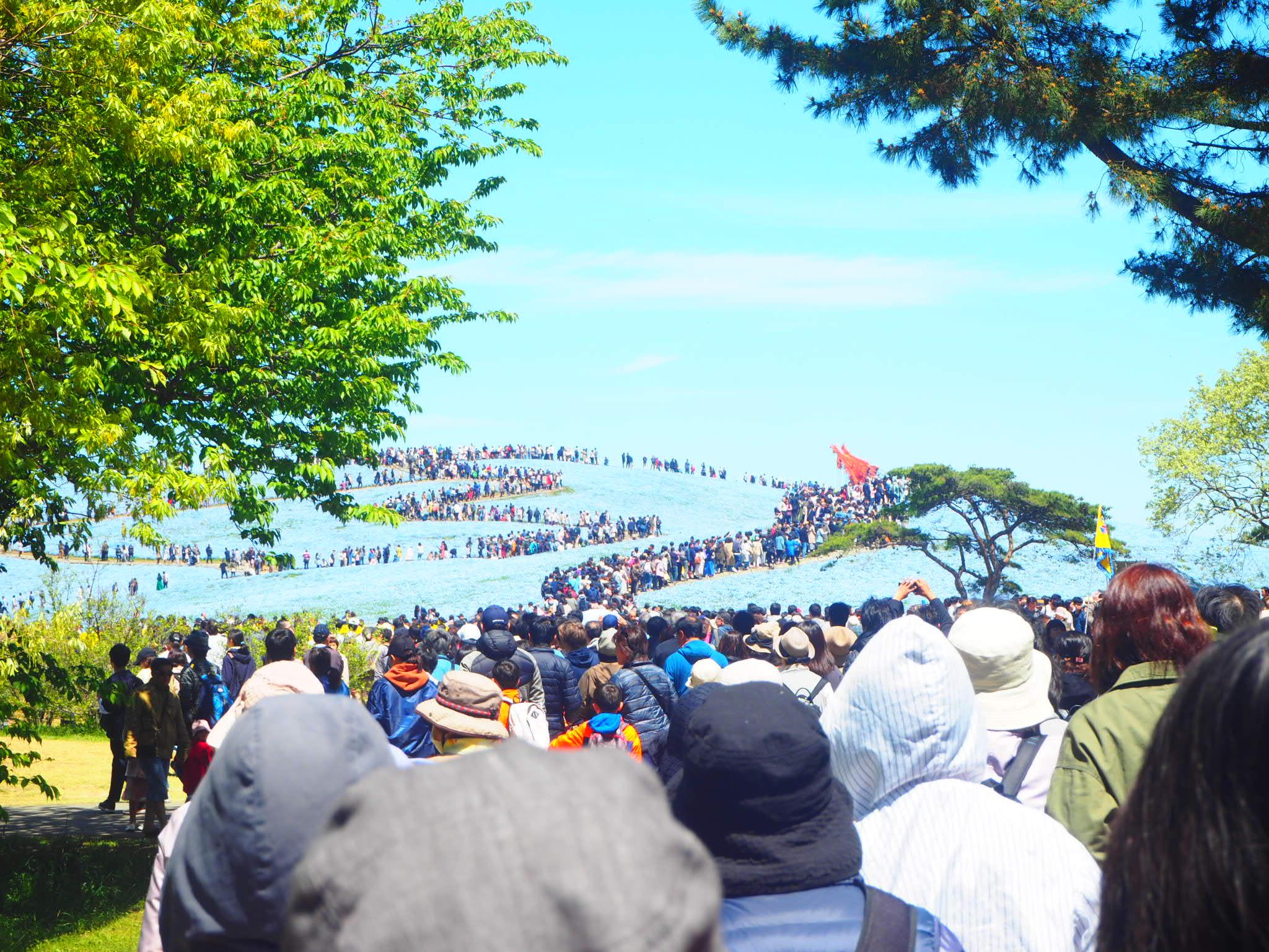 【GW】東京からも近い!!ひたち海浜公園ネモフィラのバスツアーに行ってきました♡_2