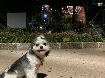 【今日のわんこ】太郎くん、夜散歩でキラキラに目を奪われるの巻!