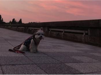 【今日のわんこ】きれいな夕日と太郎くん