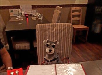 【今日のわんこ】早く出てこないかな♪ サクラちゃんドッグカフェに行く♡