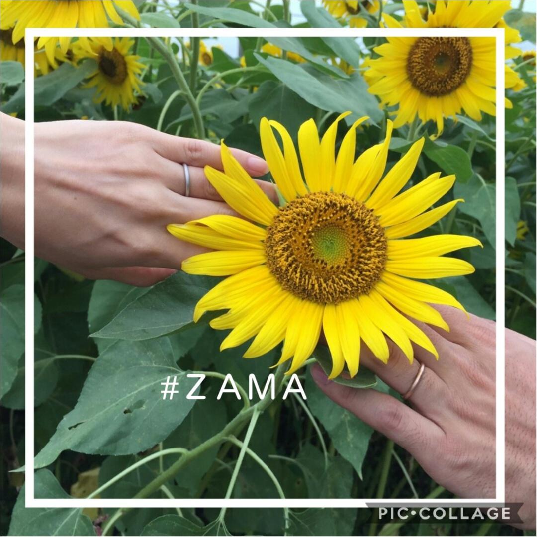 今週末のお出かけに【ひまわり畑】夏のお花といえば!気持ちも明るくなれちゃう_1