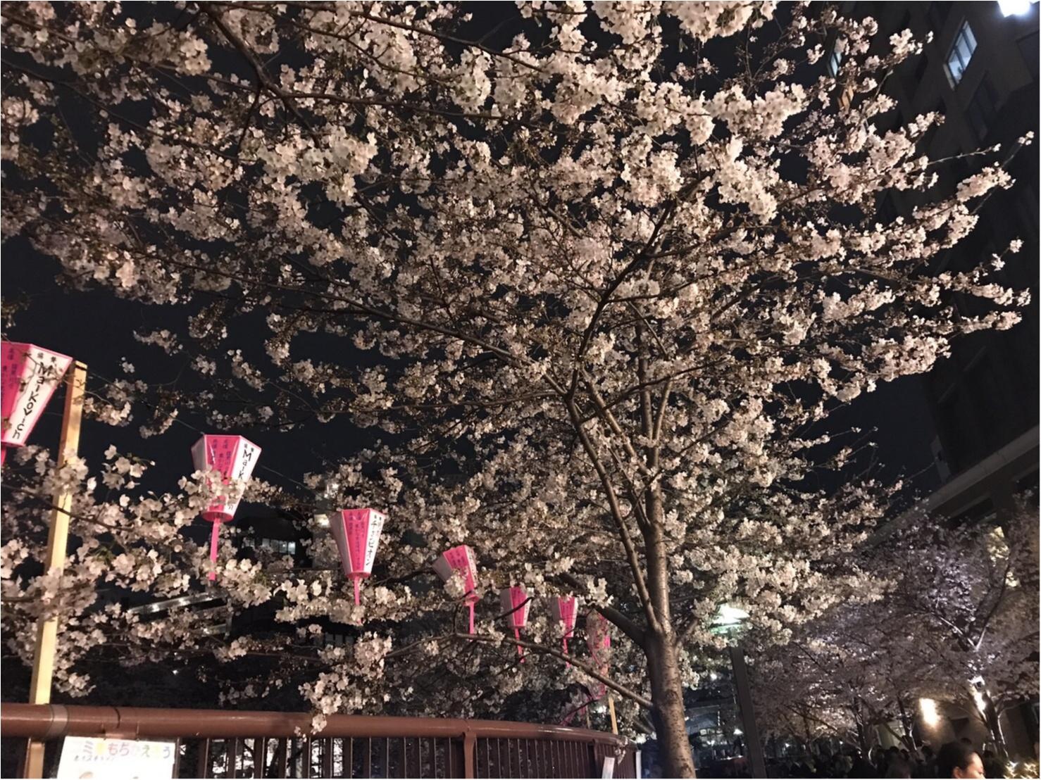 ★まだ間に合う!!昼はココで、夜はココ!東京お花見スポットご紹介!♩_5