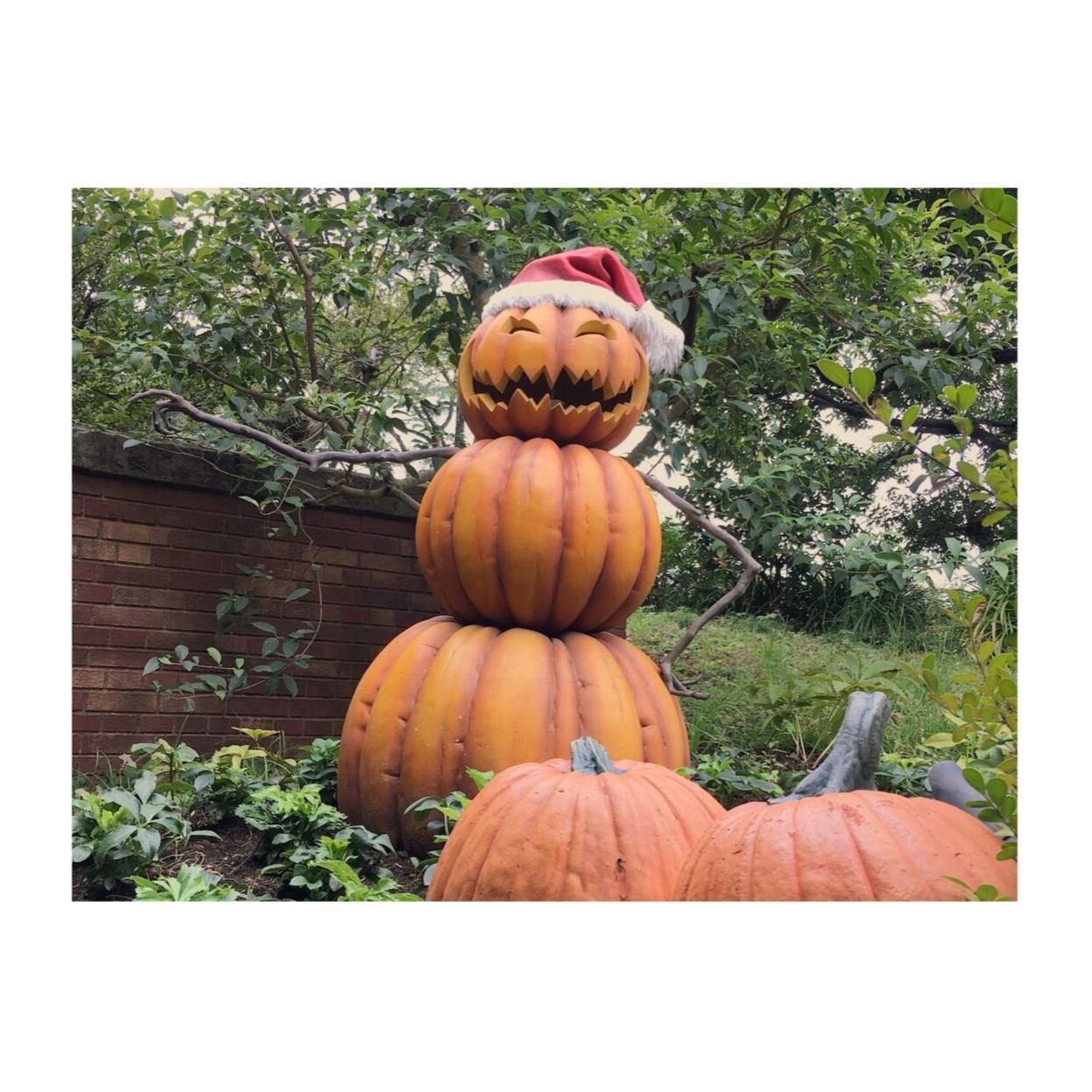 《ハロウィンシーズン到来★》【TDL】で思わずパケ買いしたオススメのお土産お菓子2選❤️_1