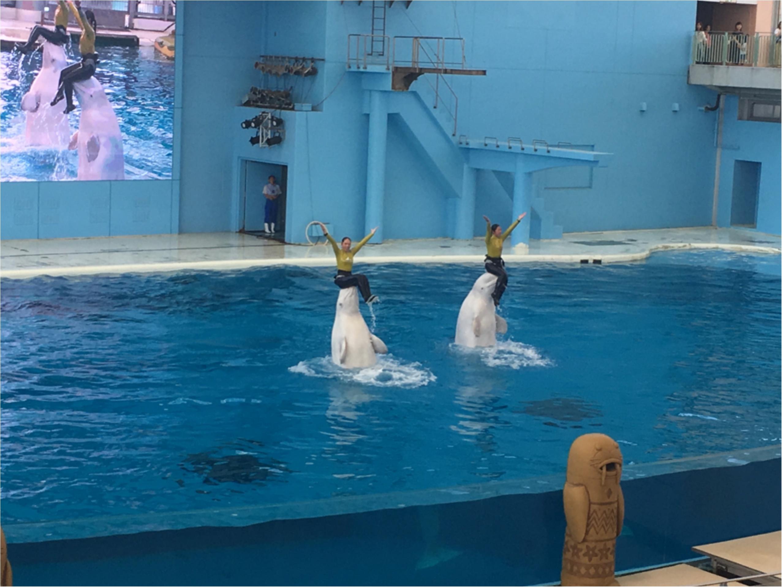 シロイルカのシンクロナイズドスイミング