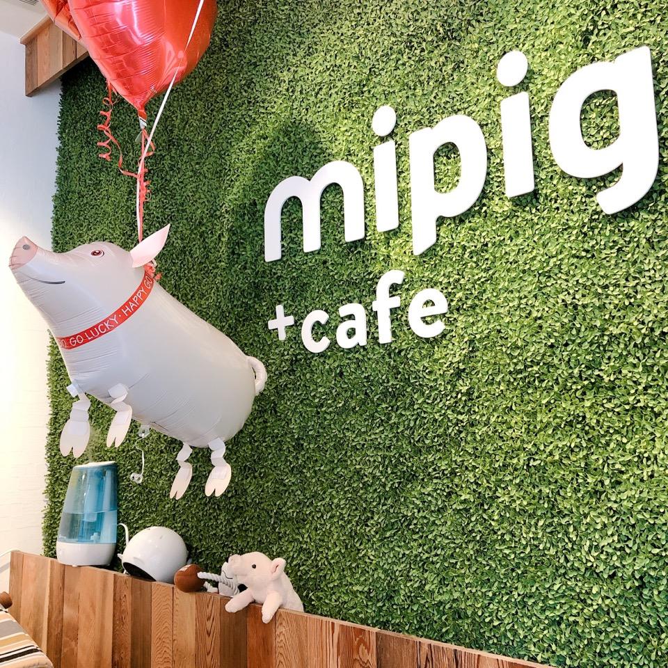可愛すぎるマイクロブタちゃん♡動物カフェで1番のおすすめ!その魅力お伝えします☺︎!_1